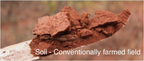 soil - conventionally farmed field